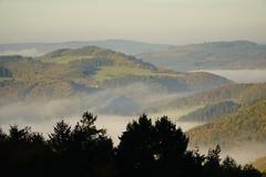 Herbststimmung (clemensgilles) Tags: eifel germany deutschland autumn fall herbst herbstwald