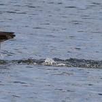 Cormorant Landing - Argyle Lake Park, NY thumbnail
