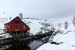 IMG_2601 (alessandro orfanù) Tags: norway lofoten vesteralen hurtigruten winter snow northernlight