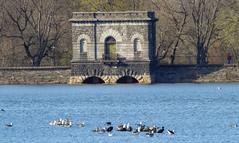 67659-New-York (xiquinhosilva) Tags: 2016 centralpark centralparkwest jacquelinekennedyonassisreservoir manhattan nyc newyork newyorkcity park usa unitedstates us