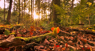 Autumn mood
