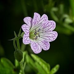 The Tiny One (MrBlueSky*) Tags: flower petal garden horticulture nature outdoor colour kewgardens royalbotanicgardens london aficionados pentax pentaxart pentaxlife pentaxk1 pentaxawards pentaxflickraward sunrays5 coth5
