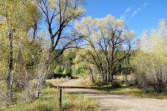 High Country Road (Patricia Henschen) Tags: swa statewildlifearea coller fall color autumn aspen thesilverthreadscenicbyway mountains riogranderiver southfork colorado fallcolor leafpeeping cloud mountain unpaved backroad cottonwood tree trees pathscaminhos road