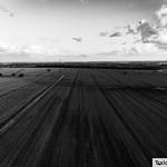 Field Overhead B&W thumbnail