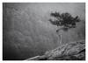 Resilient (michellelynn) Tags: orcasisland washingtonstate smoke haze summer tree blackandwhite