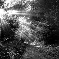 Mamiya389 (salparadise666) Tags: mamiya c330 sekor 80mm orange filter fomapan 10064 caffenol rs 13min nils volkmer vintage medium format camera film analogue 6x6 square landscape nature forest wood sun beams path hannover region niedersachsen germany monochrome morning light