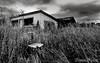 17_Oct_08_01 (Dana Prost) Tags: albertacanada bw ruraldecay