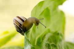 Microcosm (pagman13) Tags: microcosm snail macro micro σαλιγκάρι μικρόκοσμοσ μικρό