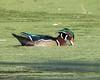 Sifting Algae (pheasantwood) Tags: shelterisland ny