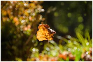 Autumn, a falling leaf ...