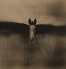 Whisper (micalngelo) Tags: horse montana analog alternativeprocess alternativephotography lithprint lithprocess holga trixfilm