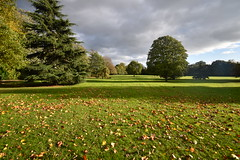 Cheam Park in the Autumn sunshine (James Mans) Tags: nikon d5500 cheam park trees autumn leaves england surrey green 1020 afp 1020mm field sky grass tree flower landscape garden