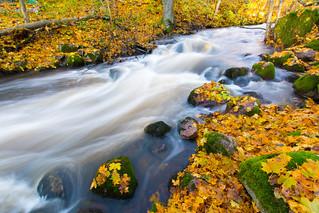 Jorvi rapids in autumn