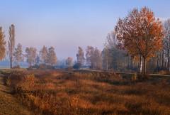 Golden Autumn (drummerwinger) Tags: rot canon700d gaden erding himmel herbst 50mm