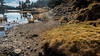 Bord du Lac Achard. 1 950 m. Chamrousse Isère (alain.deroubaix) Tags: marche lacachard 2017 chamrousse randonnée géographie isère automne hiking walk walking