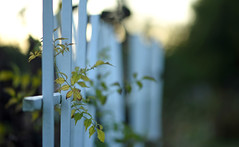 Good Night, Sun (Lala Lands) Tags: happyfencefriday hff whitepicketfence gardenfence sunsetinthegardens goodnightsun autumngoldenhour bokeh shallowdof nikkor105mmf28 nikond7200