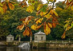 autumn gold (Anthony White) Tags: boroughofharrogate england unitedkingdom gb ilce7rm2 sel2470gmsyxlens a7r