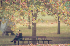 Immersed in the story (Coisroux) Tags: autumn hydepark leaves trees branches landscape dof benches reading serene relaxing people parks relaxation focus delicate dream 7dwf