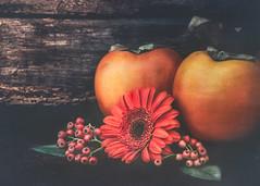 October orange (Ro Cafe) Tags: autumn orange berries caquis flower gerbera fruits rustic wood dark textured set up stilllife nikkormicro105f28 nikond600 smileonsaturday vividorange
