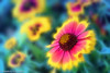 Mira Flores (frederic.gombert) Tags: lima flower light color daisy yellow red green blue spring macro sony