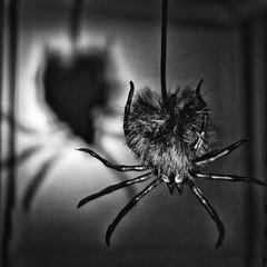 Happy Halloween! (mizzginnn) Tags: spider scary halloween bw blackandwhite holiday spooky