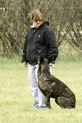 TB0A4791 (templeinmn) Tags: 2017 fall ipo mvsv schutzhund trial