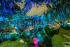 Alien planet (fractal pics) Tags: disney waltdisneyworld disneyworld animalkingdom avatar pandora disneyphotos disneyphotography sonya7rii disneyparks disneyatnight
