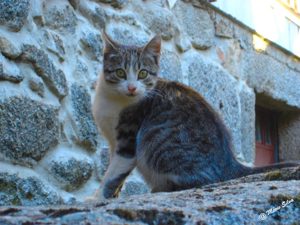 Águas Frias (Chaves) - ... gato de ohar curioso ...