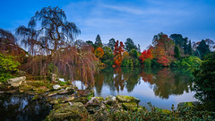 Ornamental beauty (SpectrumLight) Tags: landscape nature park water pond lake england sheffieldpark autumn herbst fall rock stone tree treebranch sky beauty sonyilce7m2 sony fe1635mmf4zaoss sonya7ii scenic np nt nationaltrust flickr garden reflections explore