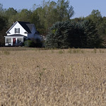 Soybeans, with House thumbnail