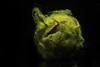 Sampson's favorite ball. (drpeterrath) Tags: canon eos5dsr 5dsr speedlight flash strobe color macro macromonday macromondays sidelit green black closeup