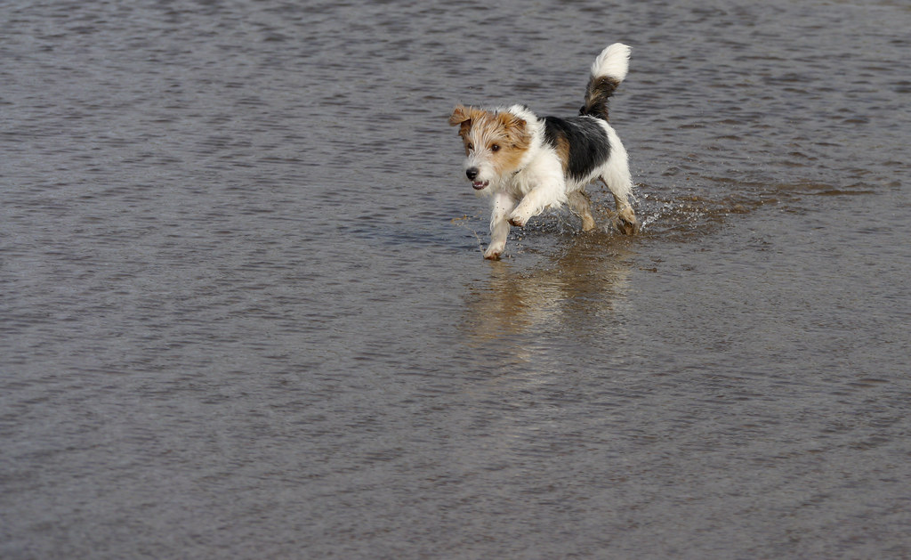 Clontarf Dog Beach