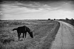 where the streets have no name (Zlatko Vickovic) Tags: zlatkovickovicphotography zlatkovickovic krusevlje photojournalism documentary dyingtimeserbia serbia srbija blackandwhite bw horse village vojvodina road
