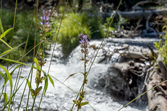 2017 Pac NW Lassen Volcanic-95 (Michael L Coyer) Tags: parks nationalparks usnationalparks unitedstatesnationalparks lassenvolcanicnationalpark lassen lassenvolcanic lassenvolcanicnatlpark mountain mount wilderness forest
