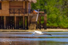 White egret at Overwater Suite