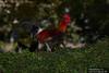 Canon269442 (godrudy6661) Tags: neworleans darktable ninthward chicken rooster