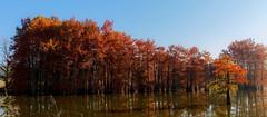 Parure d'automne (paul.porral) Tags: forest trees automne autumn landscape paysage water colors light woods cyprès ngc