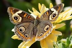 Deep Cut Gardens_652 (samramahmoud) Tags: sony zeiss sonnart18135 butterfly