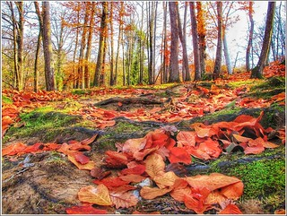 Autumn color and leaves.