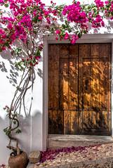 Una sombra para el verano (Alicia Clerencia) Tags: almonasterlareal pueblos villages fachadas facades door puerta bouganvilla pink rosa fucsia