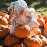 Pumpkin scene at Happy Jack farm Frankfort Kentucky thumbnail