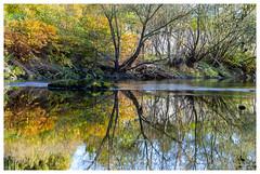 Première journée de novembre (Pascale_seg) Tags: automne autumn moselle lorraine france nikon novembre november tree trees water river rivière riverscape reflet reflets reflection orange vert green