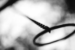 Never let go (Ir3nicus) Tags: sonsbeck nordrheinwestfalen deutschland de germany outdoor ausen niederrhein nikon d700 dslr fullframe fx afsnikkor85mm114g trimmdichpfad sport sports gymnastik gymnastics klimmzug pullup kette chain ring griff handle shallowdepthoffield geringeschärfentiefe bokeh