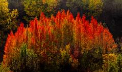 YESERO AUTUMN 1 (juan luis olaeta) Tags: forest paisajes landscape autumn otoño udazkena pirineos huesca aragon