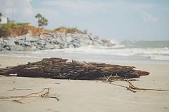 Driftwood (Brennen Tamerlano) Tags: sky driftwood wood sand beach water sea ocean rocks blur bokeh macrodreams macro nature scenic