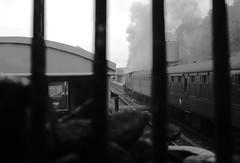 Erlestoke Manor on the Severn Valley Railway. (Keith Wilko) Tags: erlestokemanor 7812 7812erlestokemanor 7812loco loco7812 erlestokemanor7812 erlestokemanorfund gwr manorclasslocomotives 78xxclass gwrlocomotives svr severnvalleyrailway sevenvalleyrailway manor gwrmanors swindonworks greatwesternrailway worcestershire train trains steamlocomotive steamtrains uksteamtrains britishrailways br brtrains britishrail britishrailwayslocomotives photocharter 30742charters severnvalleyphotocharter svrphotocharter manorclass erlestoke railway steam uksteam brsteam severnvalleyrailwaylocomotives 1450 tankengine1450 loco1450 gwr1450