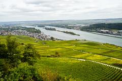 Rüdesheim am Rhein (Lesya P (Grammatey)) Tags: rüdesheim am rhein rebstöcke trauben natur herbst autumn