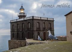Gaviotas en el Faro (josmanmelilla) Tags: melilla mar animales españa cielo nubes pwmelilla pwdmelilla flickphotowalk pwdemelilla