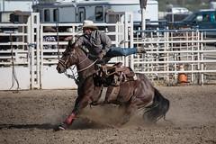 GY8A4712.jpg (BP3811) Tags: 8seconds 2017 allen arizona bareback barrel bell belt bit boots boy breakaway bronc buck buckle bull bulldogger bustin busting calf chase clown corral cow cowboys cowgirl days fall gate hat hazer header healer helmet horns horse jump kids lariat leap mutton october queen racing reins rex riders riding rodeo rope roping run saddle sheep spurs steer team teamwork tie twist wilcox wrestling