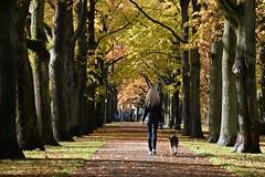autumn walk (veebruar) Tags: dog girl autumn fall trees e